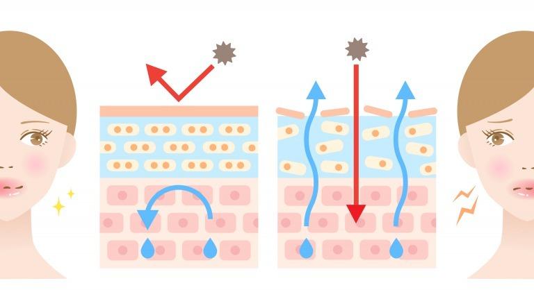 バリア機能が低下した肌の図
